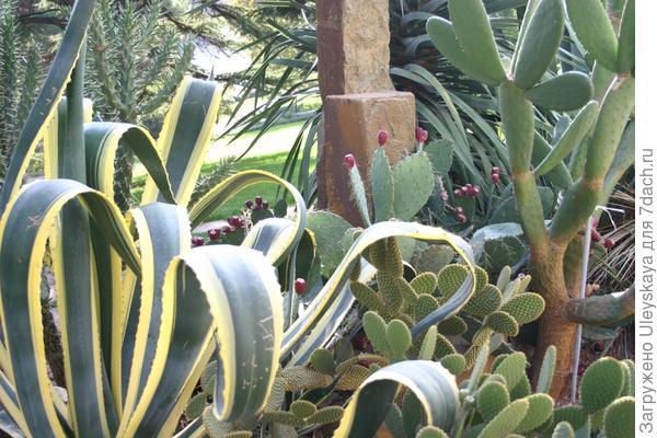Мексиканский сад.