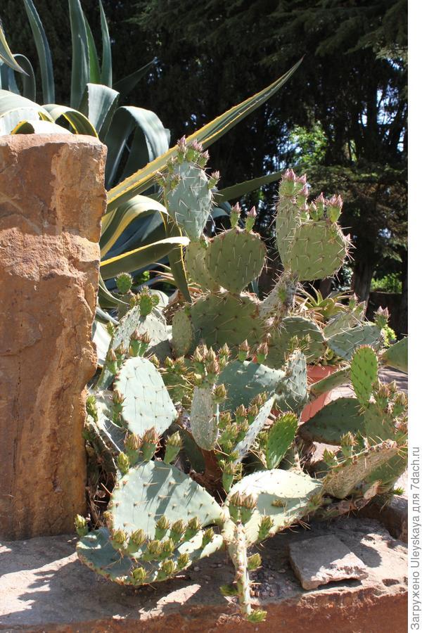 Мексиканский сад в ЛОК Айвазовское