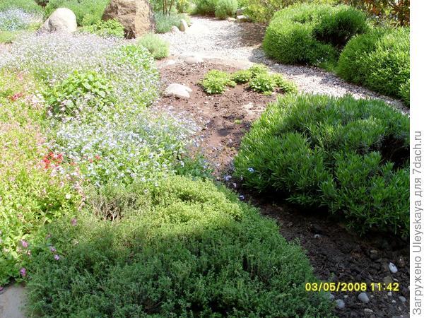 Сад душистых растений.