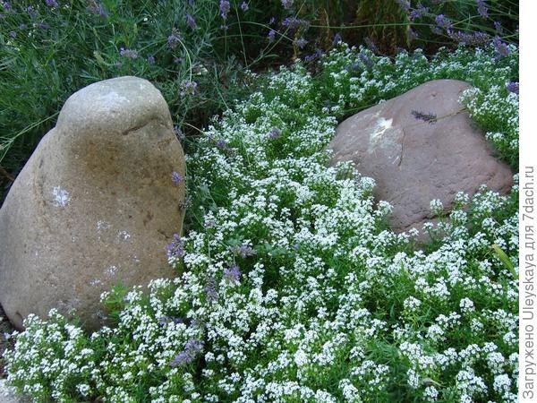 Камни - основа рокария.