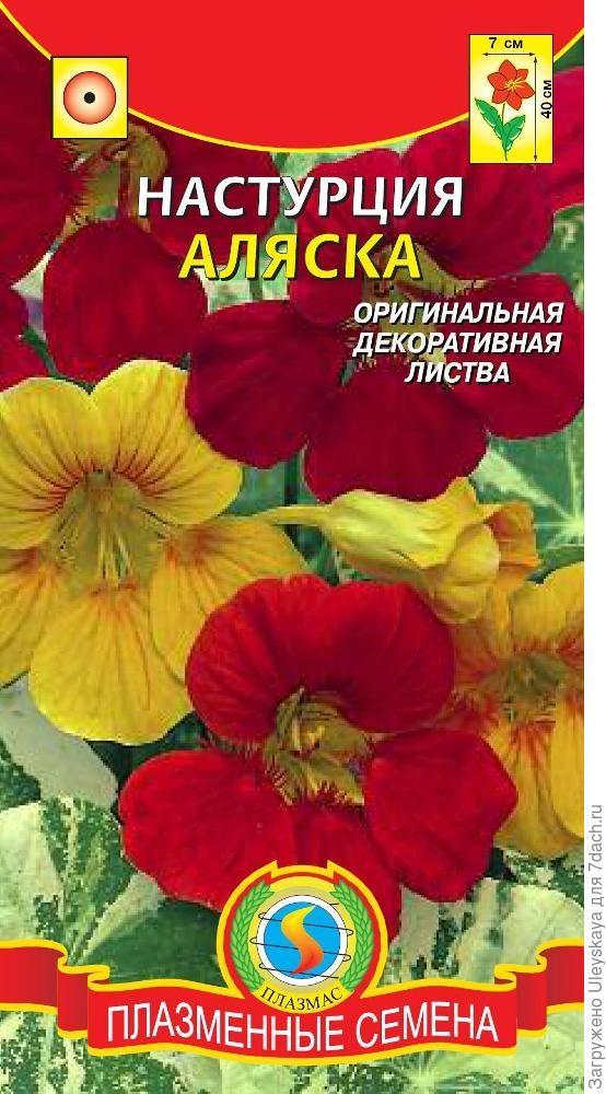 Настурция - цветок или овощ?