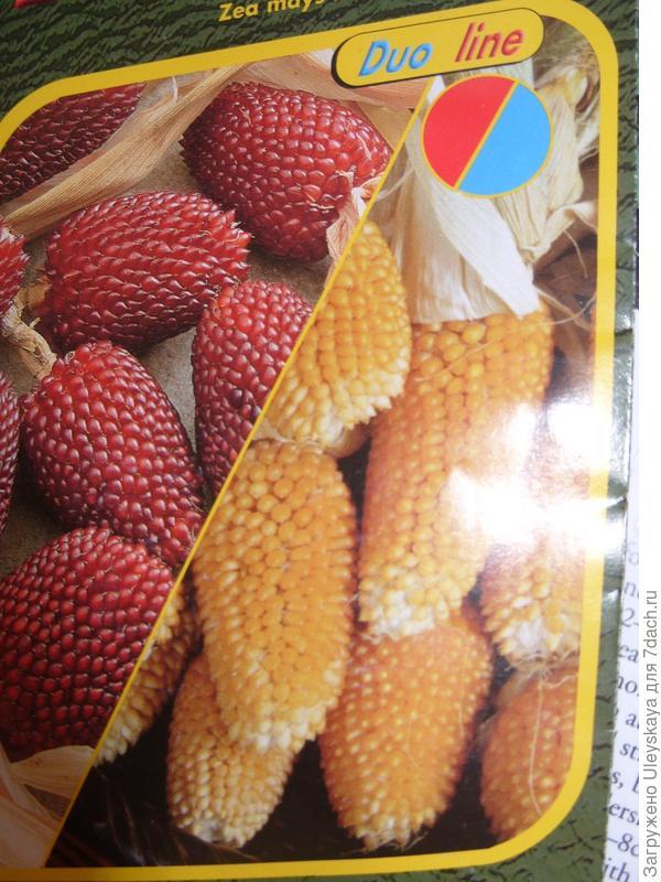 Кукуруза сорт 'Jahodova'.