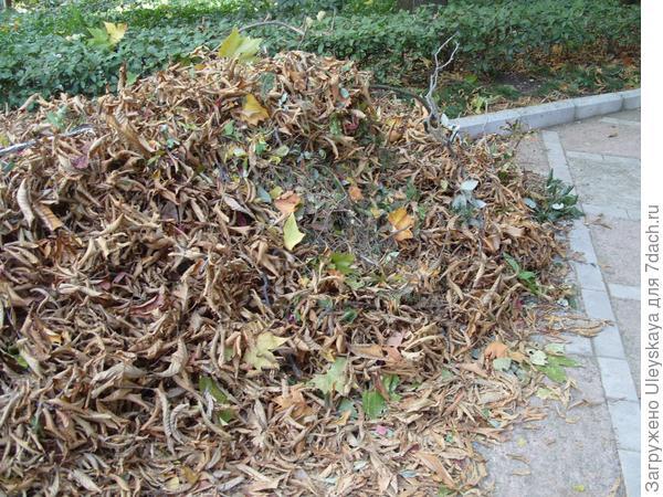 Сорванные ветром листья, 20 октября
