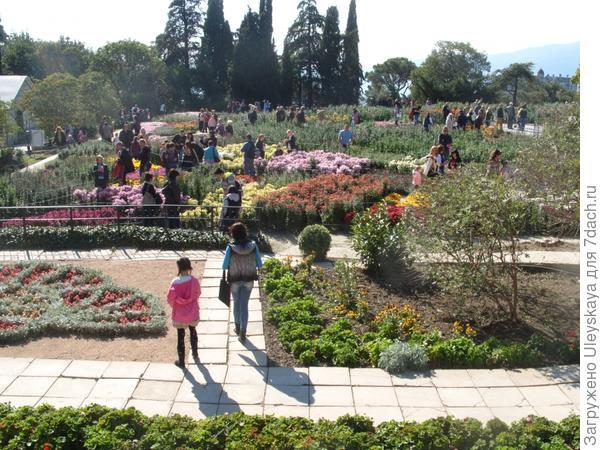 Выставочный участок хризантем Никитского ботанического сада, 20 октября