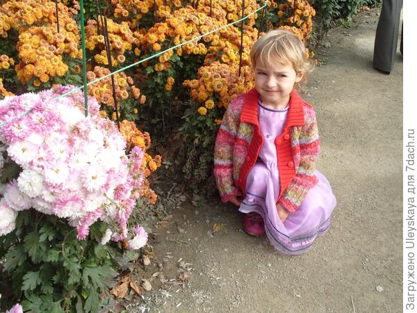 На выставке хризантем