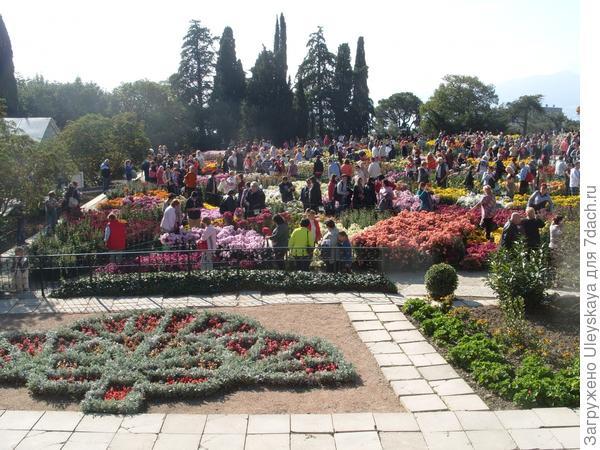 На осеннем балу хризантем в Никитском ботаническом саду 2 ноября