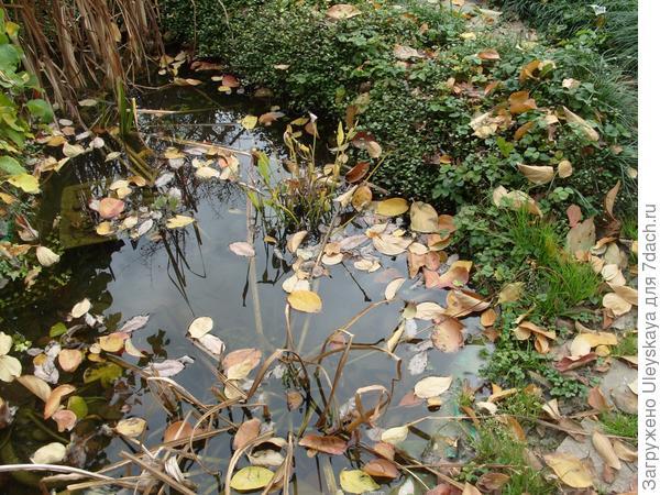 Осенний водоём