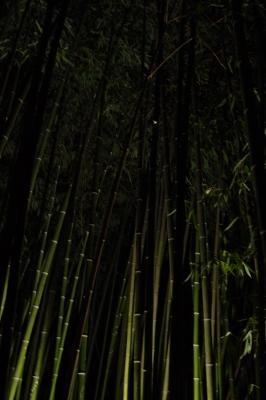 Подсветка бамбука
