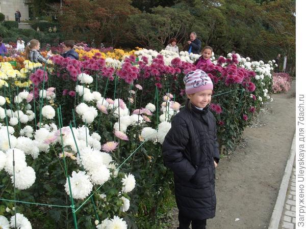 Девочка и хризантемы