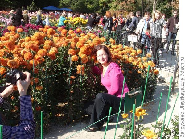 Девушка и хризантемы