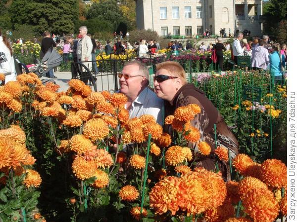 Мы счастливы в хризантемах