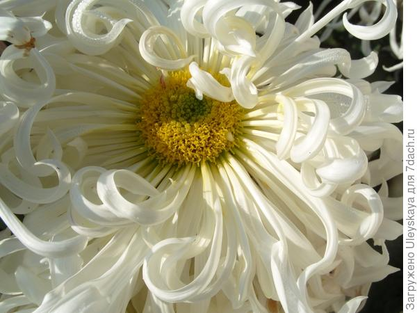 Конец цветения