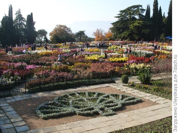 Бал хризантем, 24 ноября