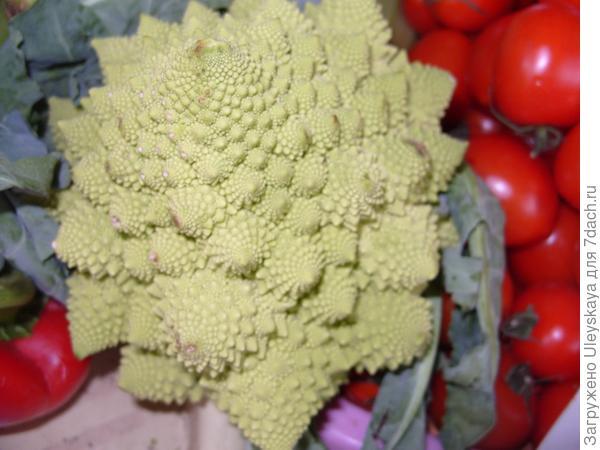 Цветная капуста Амфора