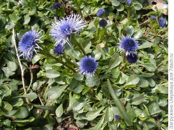 голубое в апреле