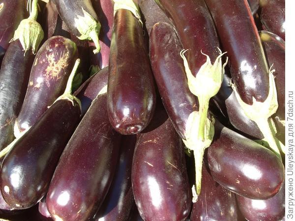Баклажан - овощ долголетия