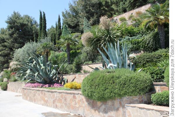 Агавы в террасном саду