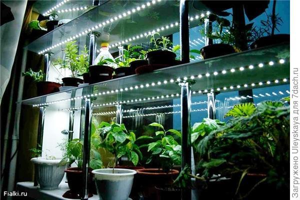 Освещение - второй главный фактор выращивания качественной рассады