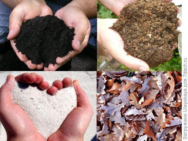 В первую очередь от почвы зависит какая будет рассада