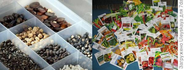 Готовим семена к посеву