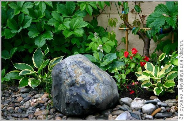 Хосты и камень