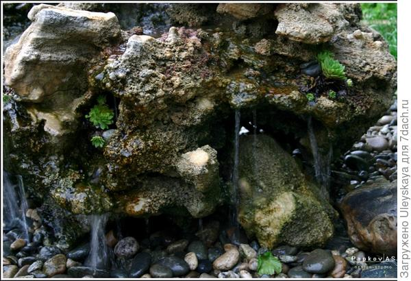 Камень и молодило