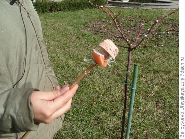 Губка на палочке для нанесения садовой краски