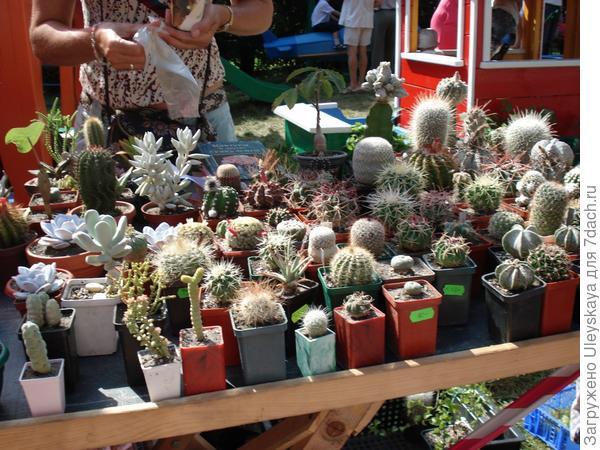 Выставка-продажа кактусов
