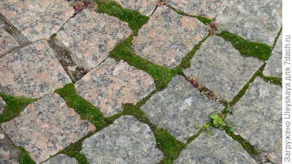 Мох и каменная плитка