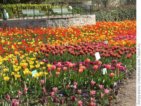 На выставке 9 апреля - тюльпановое великолепие