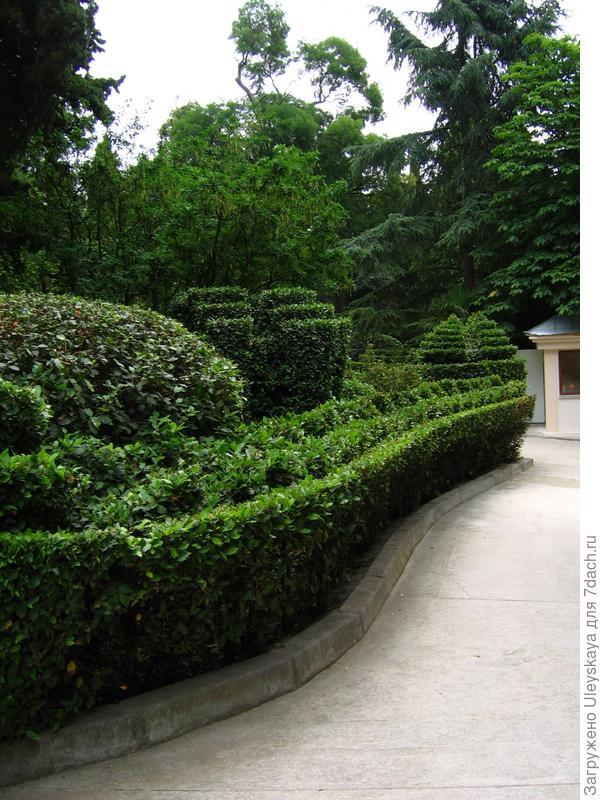 Живые изгороди в парке санатория Пушкино