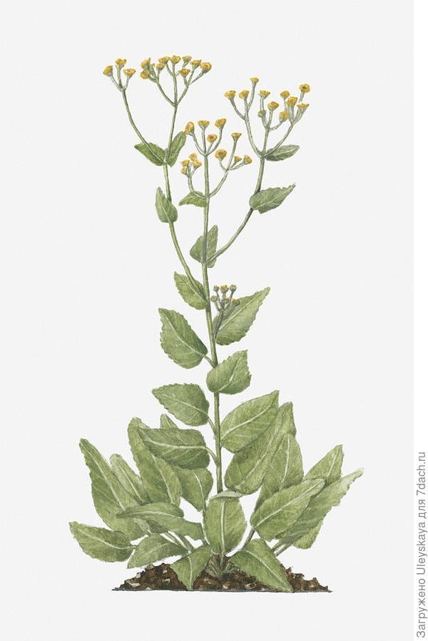 Интересный рисунок растения