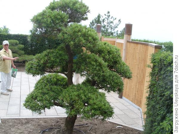Главный вход в японский сад