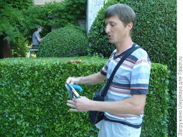 Секатор и ножовка – непременные сопутствующие садовые инструменты для топиарной стрижки и стрижки живых изгородей