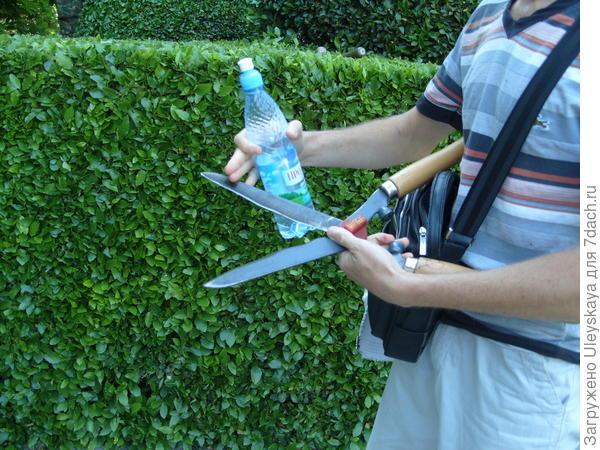 Поверхность садовых ножниц в процессе стрижки чистим водой