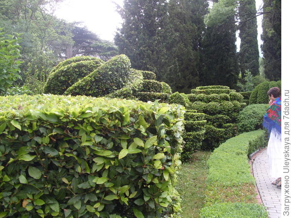 Зеленая растительная пластика топиарного искусства