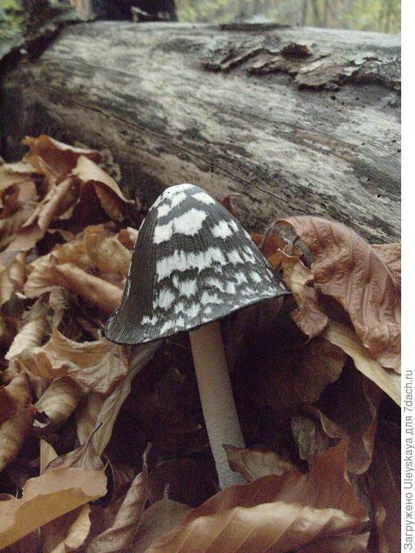 Что за гриб