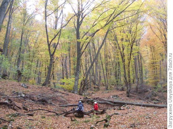 В осеннем крымском лесу