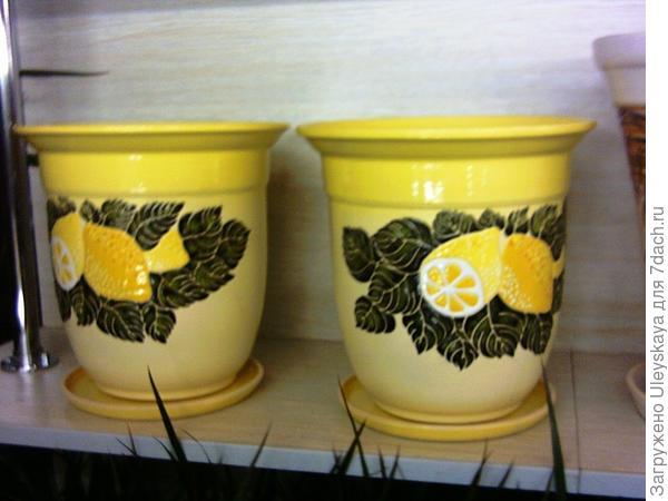 Цитрусовые горшки для цитрусовых комнатных растений