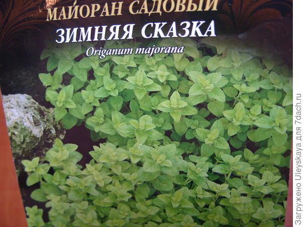 Майоран садовый сорт Зимняя Сказка