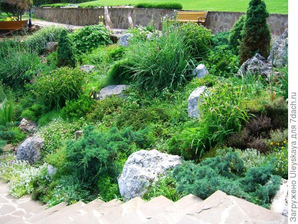 Можжевельники в каменистом саду