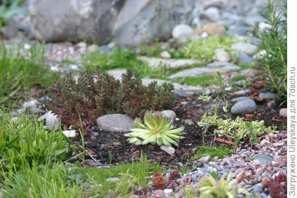 Когда растениям хорошо в рокарии