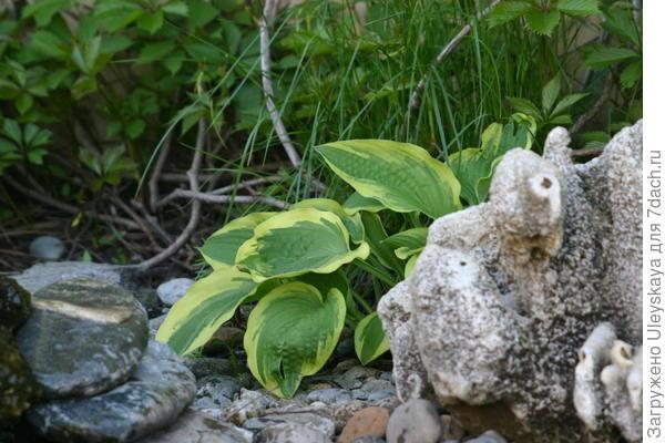 Рокарий: камни уже перенесены в натуру