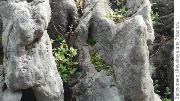 Камни, имитирующие скалы, в структуре рокария