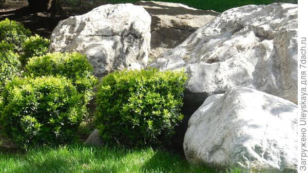 Камни дают прохладу растущим рядом растениям
