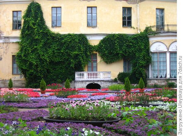Фасад дома декорирует виноград культурный, создавая фон для парада цветников. Фото А. Папкова