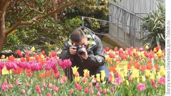 Снимаем тюльпаны