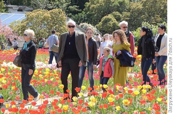 Василий Лановой на выставке тюльпанов 2015 года. Никитский ботанический сад.