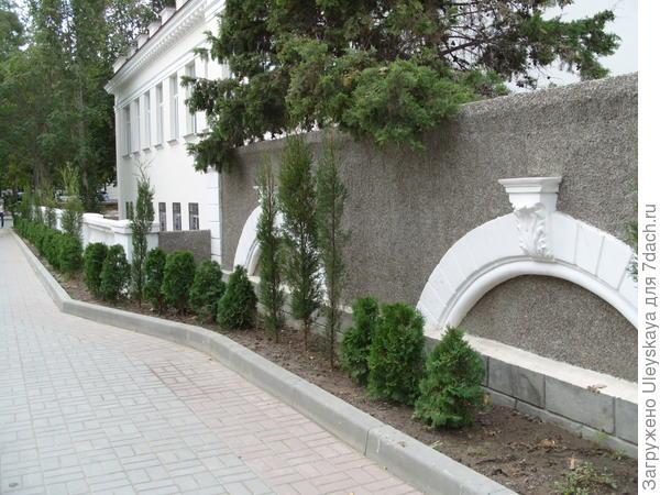 Хвойная живая изгородь из туи и кипариса, г. Севастополь.