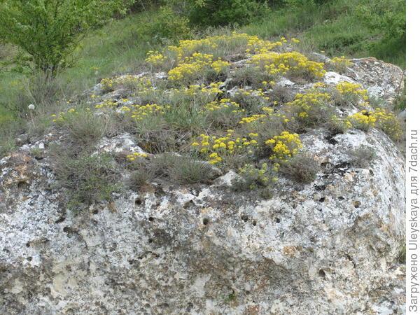 Мини-рокарий на крупном камне